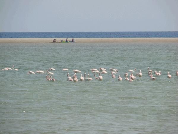 flamingos_villassimius