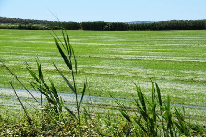 tijens reisverslag sardinië juni zien we deze rijstvelden