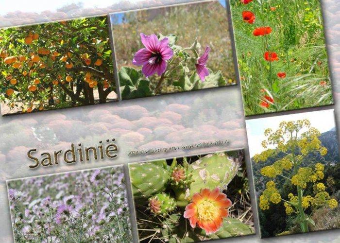 Bloemenpracht op Sardinië